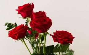 , Change The Look Of Your Home With Mini Roses